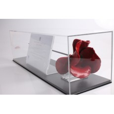 Tower of London Poppy Display Case Landscape